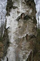 Birch Tree 02 by Kitsch-Craft