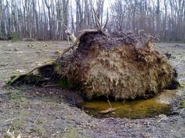 Fallen Tree 02 by Kitsch-Craft
