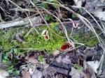 Scarlet Elf Cup 03 by Kitsch-Craft