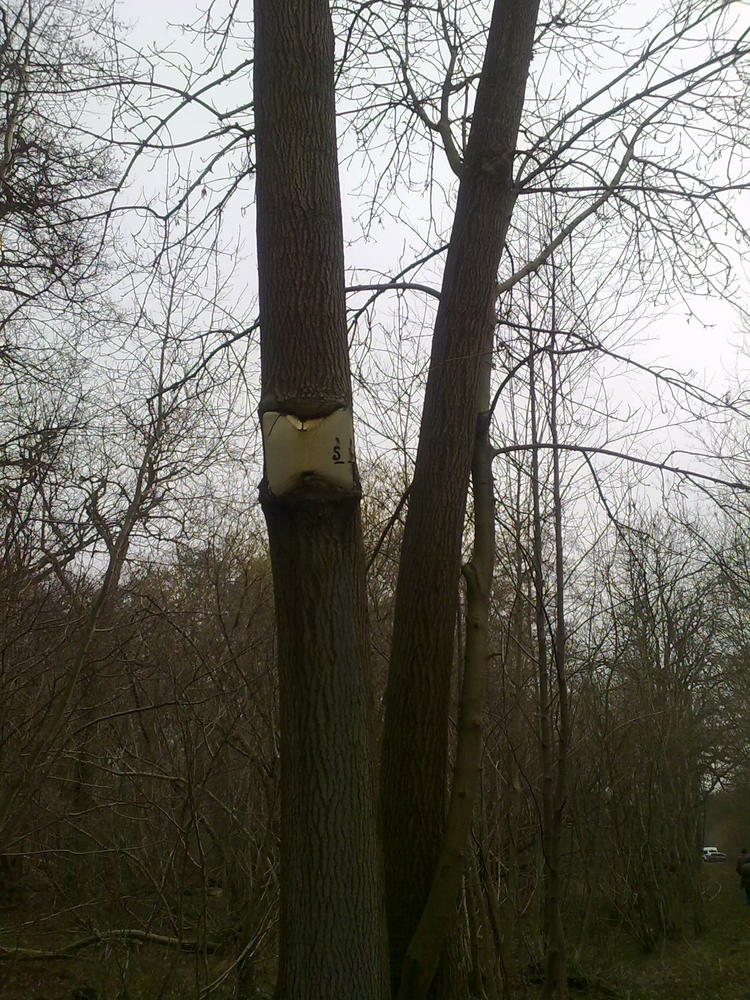Tree growing around sign by Kitsch-Craft