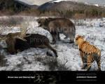 Brown bear and Siberian tiger