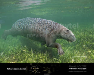 Paleoparadoxia tabatai by Rom-u