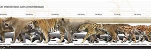 Prehistoric Pantherinae by Rom-u