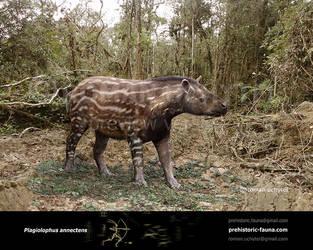 Plagiolophus annectens by Rom-u