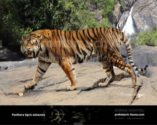 Panthera tigris acutidens by Rom-u