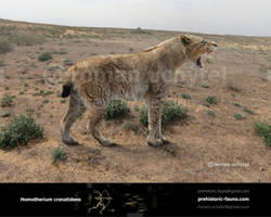 Homotherium crenatidens by Rom-u