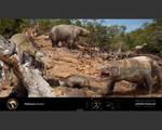Pleistocene Australia