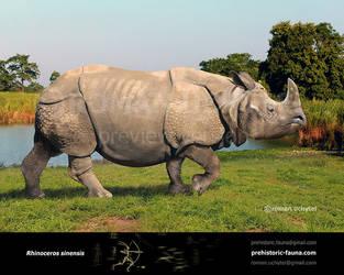Rhinoceros sinensis by Rom-u