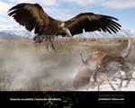 Aiolornis incredibilis