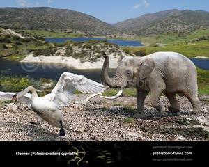 Palaeoloxodon cypriotes