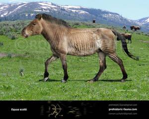 Scott's horse