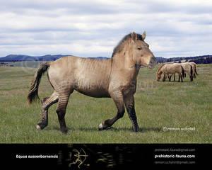 Equus sussenbornensis