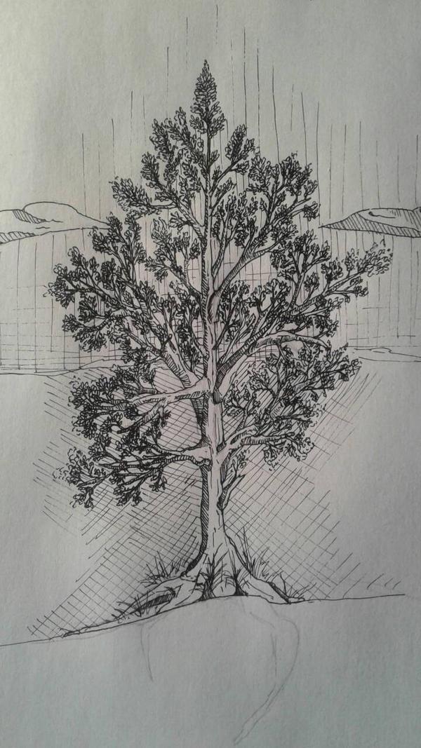 TreeJust by Westuk