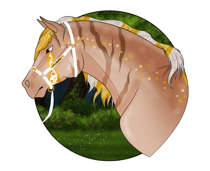 N5128 King Midas Returns - Stallion
