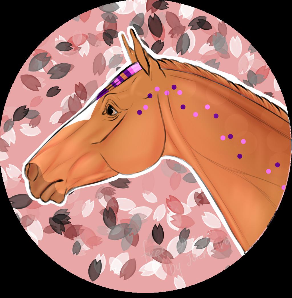 N5165 Aprikose - Stallion