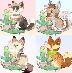 cacti ychs