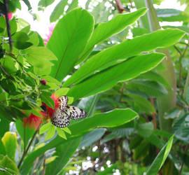 Butterfly House 1 by davidanaandrake