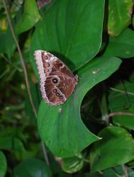 Butterfly House 3 by davidanaandrake