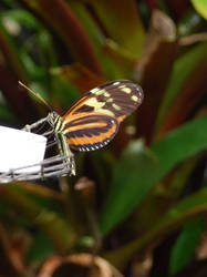 Butterfly House 4