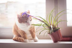 Ginger5 by Kelshray-photo