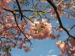 Spring in Brazil