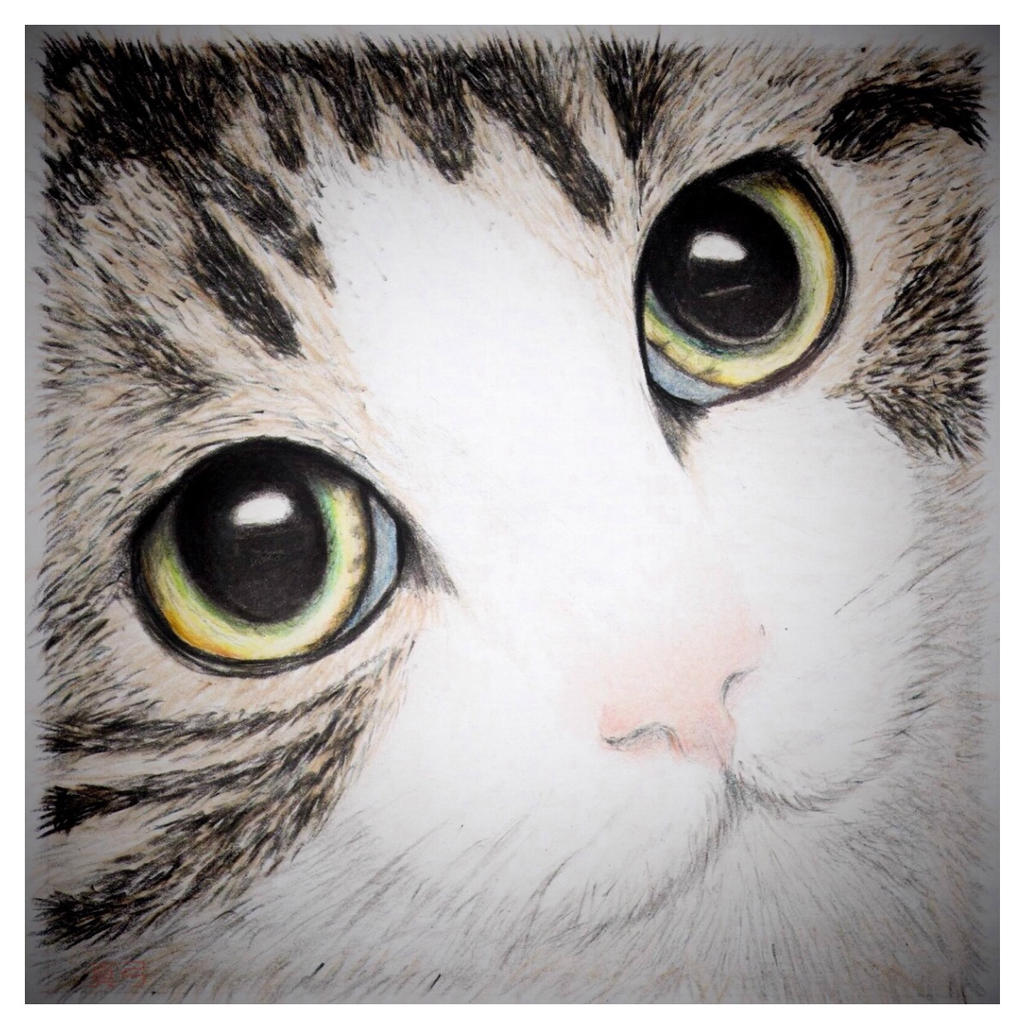Sarah's Cat - New Version by seek-and-hide