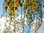Spring Fall