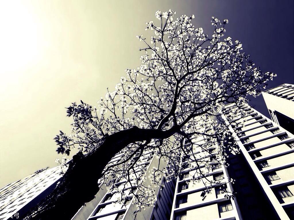 Urban Dreams by seek-and-hide