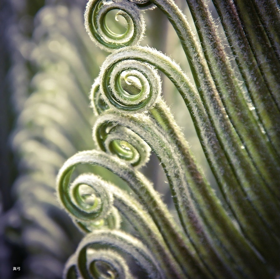 Uncoiling