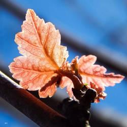 Springtime Wings by seek-and-hide