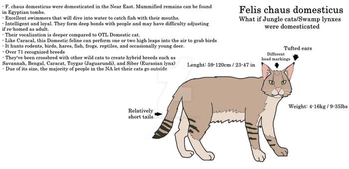 Domesticated Jungle cat/Swamp lynx.