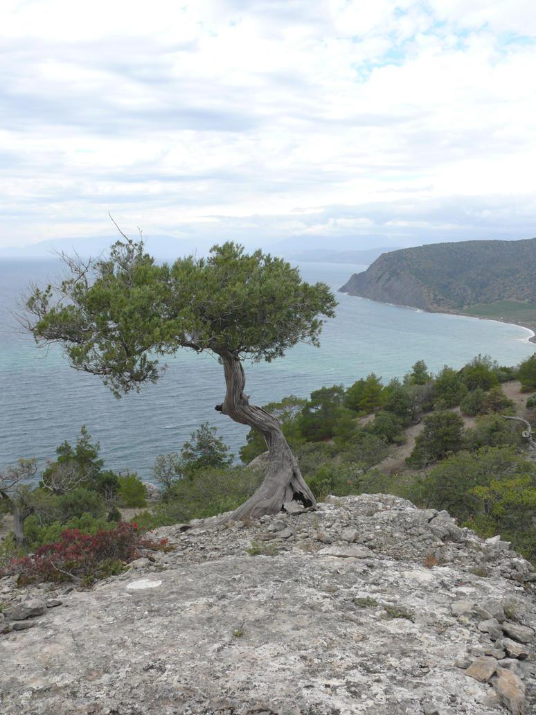September 2013 Crimea Sudak P1050984 by IValerii