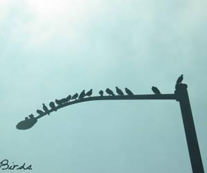 Birds. by Nowherexbutxhere
