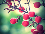 Berries in the sun. by Nowherexbutxhere
