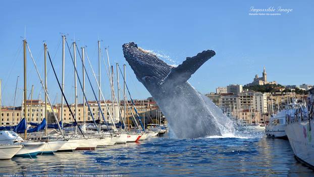 Impossible Image, Marseille Harbor into quarantine