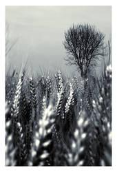 Landscape Crowd by krush