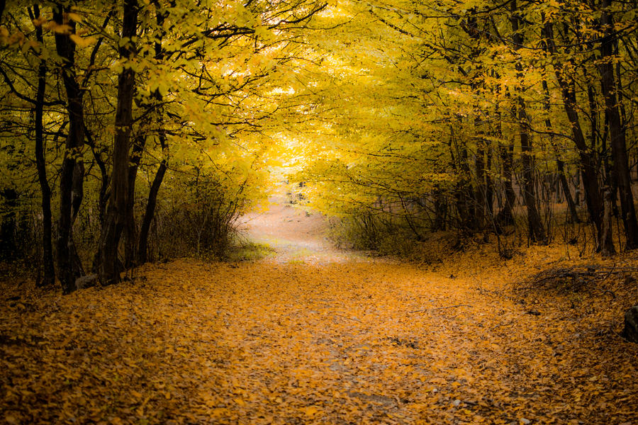 Forest Path by PJohnny