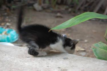 Kitten by weddige