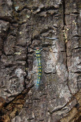 Caterpillar by weddige