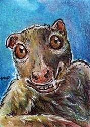 aceo for lemurkat by kailavmp