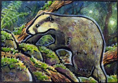 aceo badger