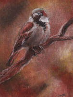 not-aceo sparrow by kailavmp