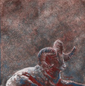 mountain ram by kailavmp