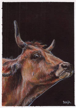 aceo cow