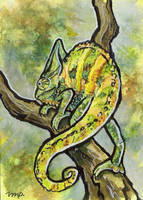 aceo veiled chameleon by kailavmp