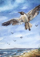 aceo (afa) gull by kailavmp