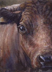 aceo cow by kailavmp