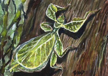 aceo not a leaf by kailavmp