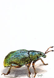 aceo weevil by kailavmp