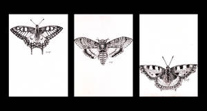 micron butterfly aceos